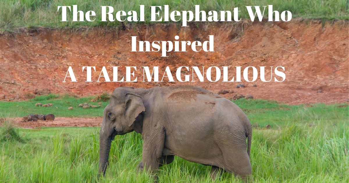 The Real Elephant Who Inspired A TALE MAGNOLIOUS