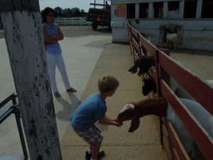Feeding the Goats at Young's